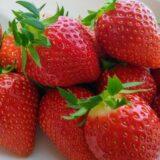 【まだ間に合う】10,000円〜ふるさと納税の返礼品おすすめ果物トップ5